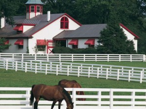 Kentucky-Derby-Private-Horse-Farm-Tour-USA-Today-Sports-Events-2